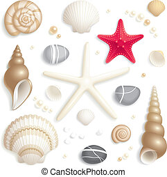 Seashell set - Set of seashells, starfishes and pebbles