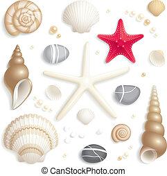 seashell, set