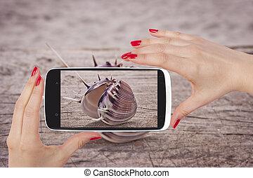 Seashell snapshot.