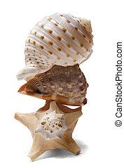 Seashell Stack over white