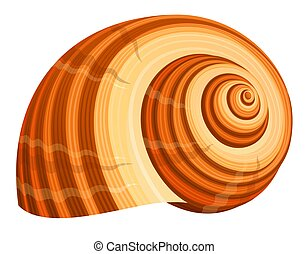 Seashell - illustration of seashell isolated on white