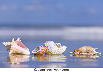 Seashells on wet sand with reflection and foam