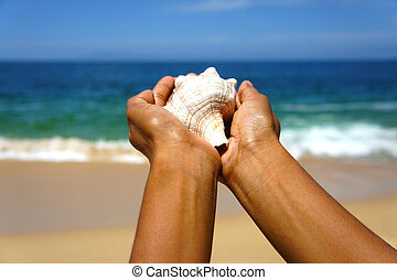 Seashell - Female hands holding a seashell on a tropical...