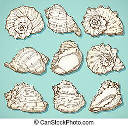 seashell, style, ensemble, vendange