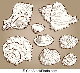 seashell, style, ensemble, vendange