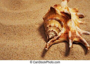 seashell, su, uno, sand.