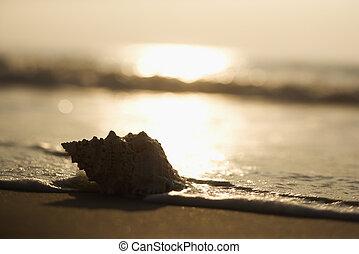 seashell, sunset.