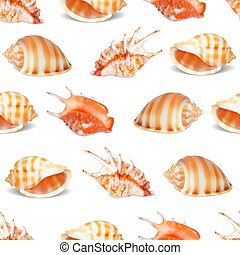 seashell, vecteur, illustration., collection