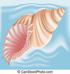 seashell., vector.