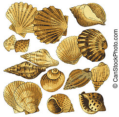 seashell, verzameling