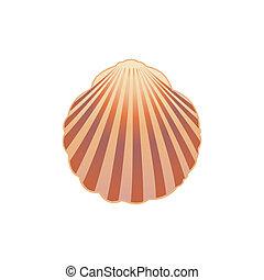 seashell., vettore, eps.10., illustrazione