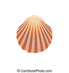 seashell., vettore, illustrazione, eps.10.