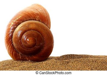 seashell, vrijstaand
