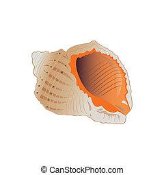 seashell., wektor, eps.10., ilustracja