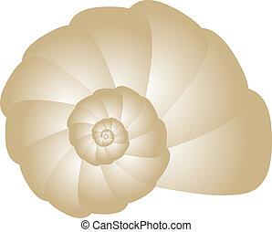 seashell, wektor, ilustracja
