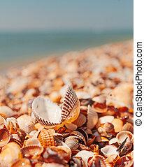 Seashell with open valves on the summer beach near sea...