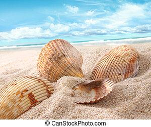 seashells , άμμος ακρογιαλιά