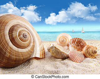 seashells , παραλία