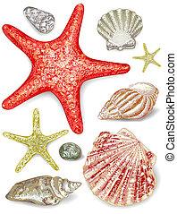 seashells., ベクトル, セット, illustration.