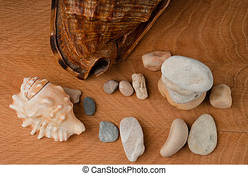 Seashells and a bunch of sea stones on a wooden board