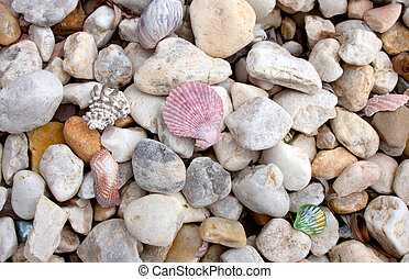 Seashells And Colored Rocks Background