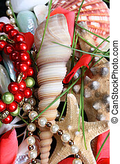 Seashells and jewelery - Variety of seashells and jewelery ...