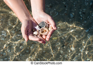 seashells and sand, seashells in hands on the background of the sea, family, father's and son's hands, child and parents on a trip, the ocean seashore.