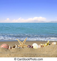 Seashells and starfish on a beach sand. In the background of...