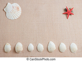 Seashells and starfish on wooden background with copyspace
