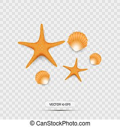 Seashells and starfish. Realistic 3d vector icons. Isolated