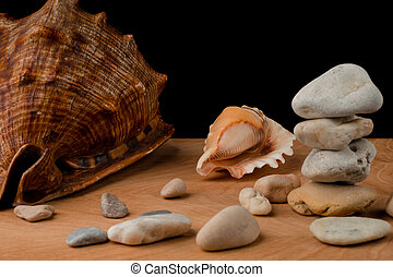Seashells and stones, on a blackboard on a black background