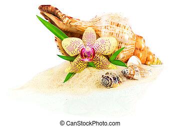 Seashells, bamboo and orchid