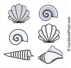 seashells, -, cartone animato, vettore