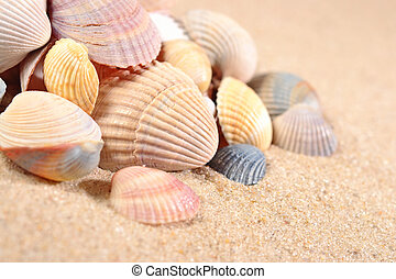 Seashells close-up in a sand