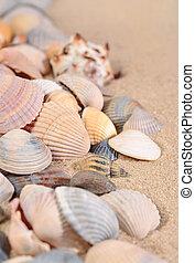 Seashells close-up on a beach sand