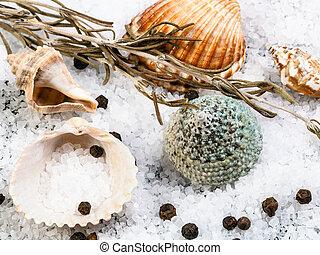 seashells, coarse grained Sea Salt and peppercorn