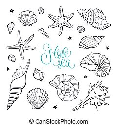 seashells, collection