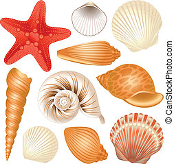 Seashells collection - Colorful set of seashells and red ...