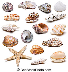 Seashells collection. - A collection of seashells isolated...