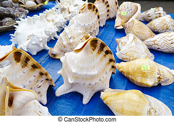 Seashells collection put up for sale on the stand in Kolobrzeg in Poland