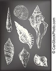 seashells, divers, 7