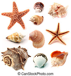 seashells, e, starfish, set