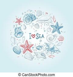 seashells, fond