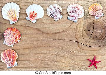 Seashells frame on old wood
