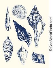 seashells, gevarieerd, 7
