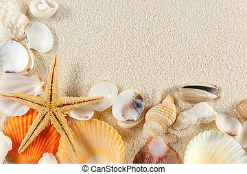 Seashells group