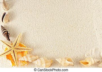 seashells, gruppe