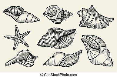 Seashells hand drawn set.