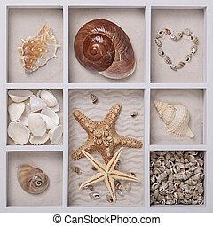 Seashells in a white box - Seashells on sand in a white box