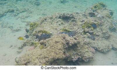 Seashells in blue sea